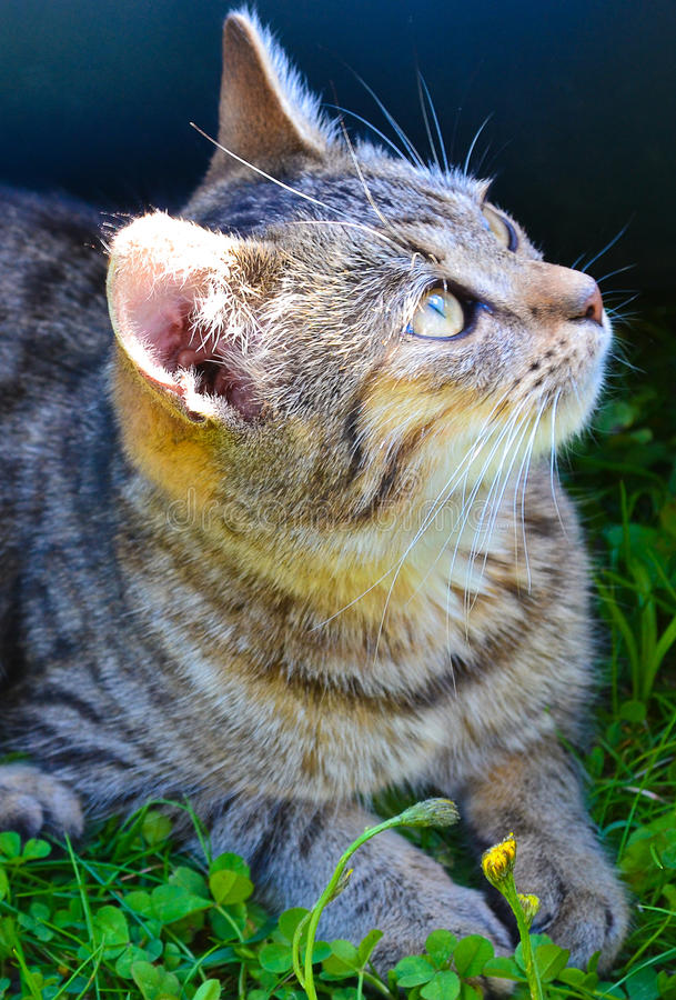 Snout γατών στοκ φωτογραφίες