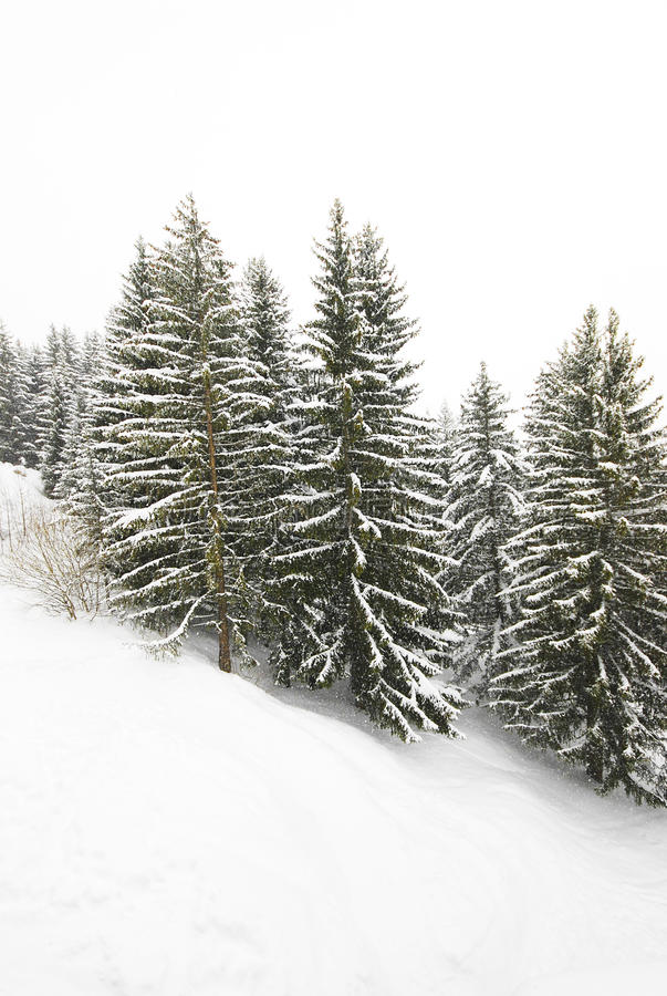 Download Snow stock image. Image of heavy, holidays, blizzard - 16194127