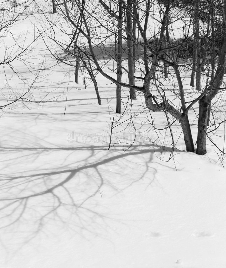 Snow. A picture of tree shadows reflecting off of freshly fallen snow royalty free stock photos