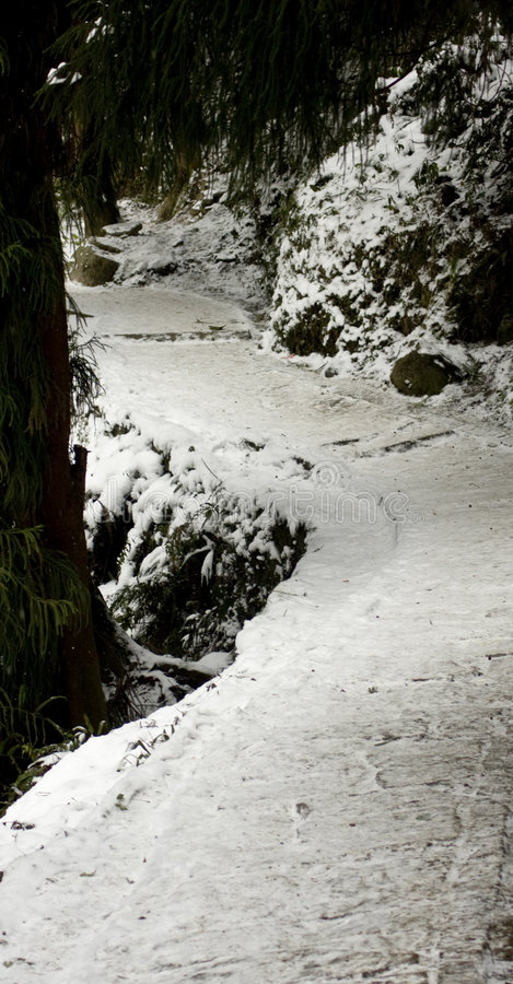 Snow. 10 Qingcheng Mountain largest since a snow royalty free stock photography