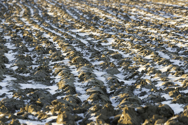 Snow in Agricultural Field. Which is turned over royalty free stock images