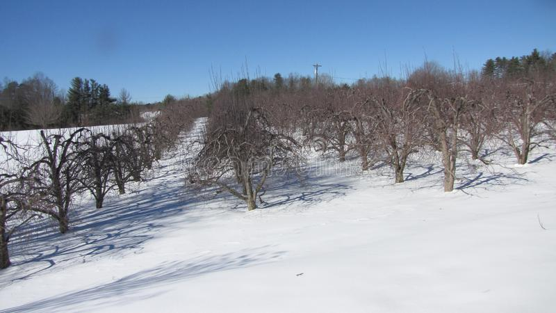 SNOW and APPLE TREES royalty free stock images