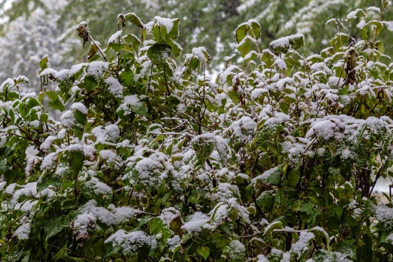 First snow of 2018 winter season in Omaha Nebraska USA. Snow arrived Omaha Nebraska USA today October 14 2018 marking the first snow of the 2018-19 winter season royalty free stock photos