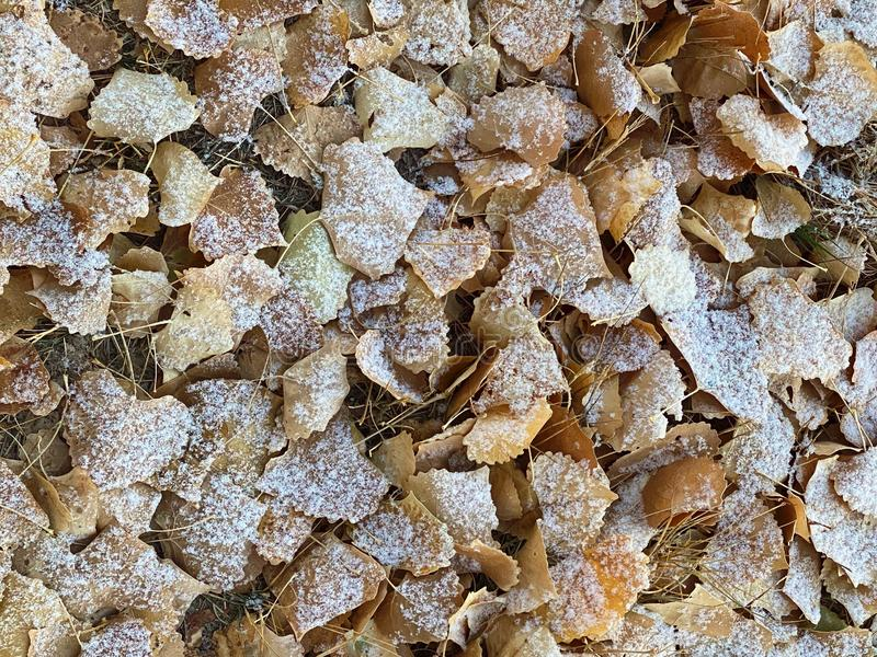 Snow on Autumn Leaves 3D Background royalty free stock photos