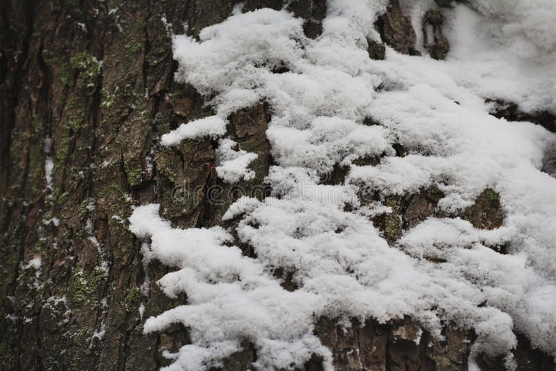 The snow on the bark of a tree royalty free stock photos