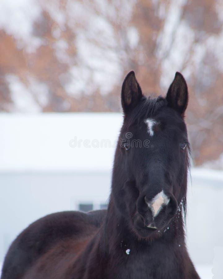 Snow Beauty stock photo