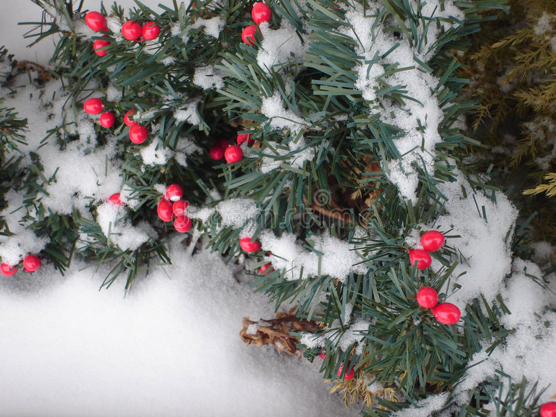 Snow Berries stock photography