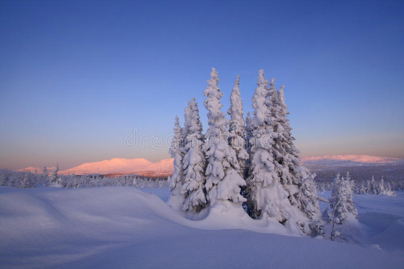 The snow-bound forest is in the mountains of North royalty free stock photography