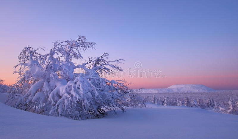The snow-bound forest is in the mountains of North Ural stock photo