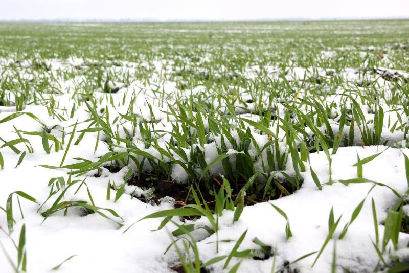 Snow-bound gebied stock afbeelding