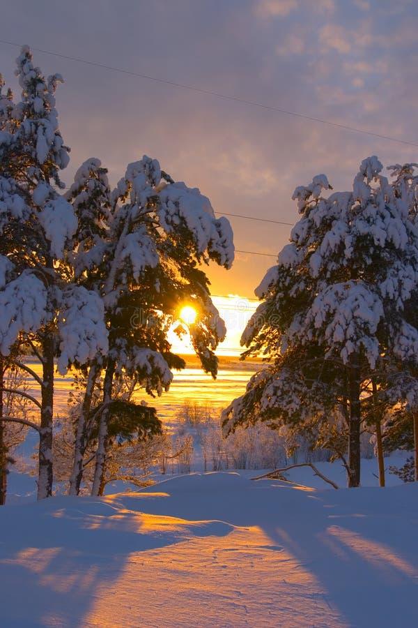 Snow-bound trees stock image