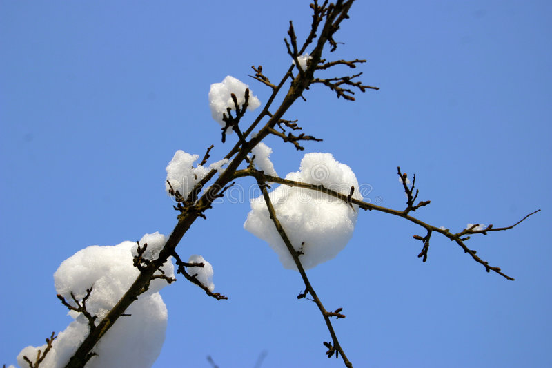 Snow on branch 2 royalty free stock images