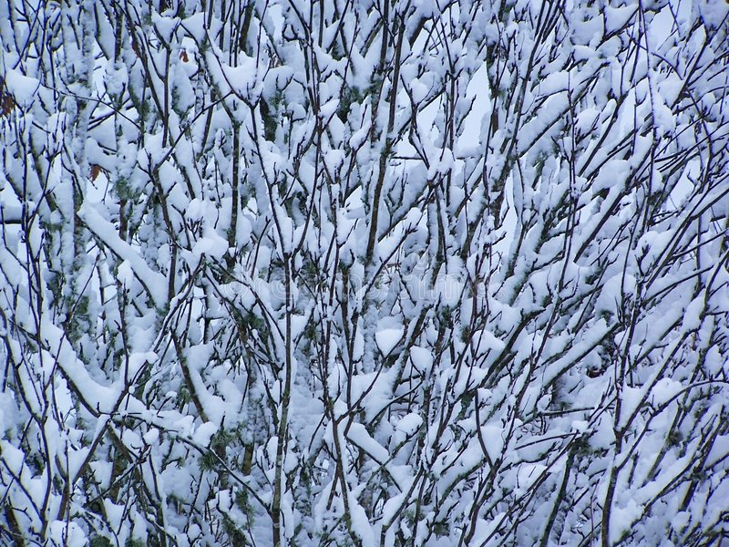 Snow on branches royalty free stock photography