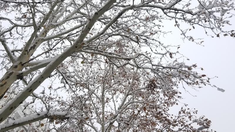 Snow on branches in the forest. This is photo of Snow on branches in the forest in southeastern Europe stock images