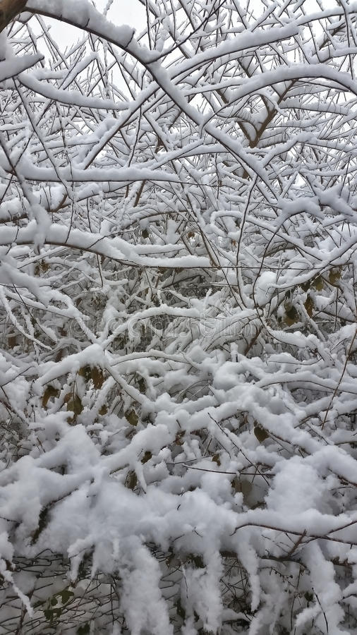 Snow on the branches royalty free stock photos