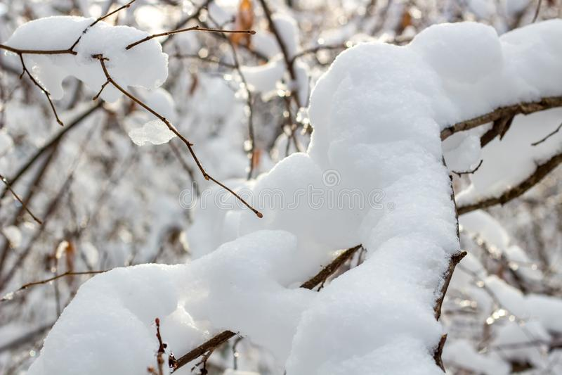 Snow on the branches in winter. Background stock images