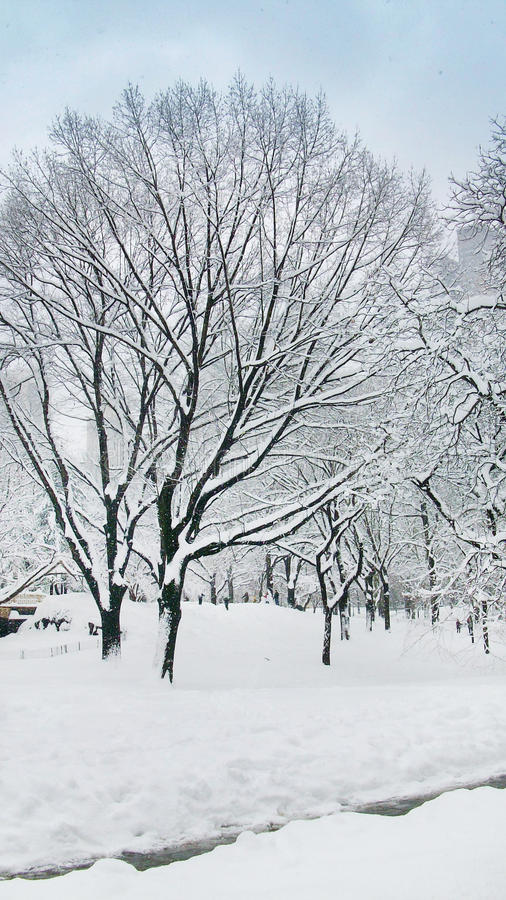 Snow cap trees in Central Park New York royalty free stock photo