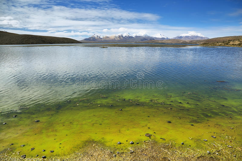 Snow capped high mountains reflected in Lake Chungara stock image