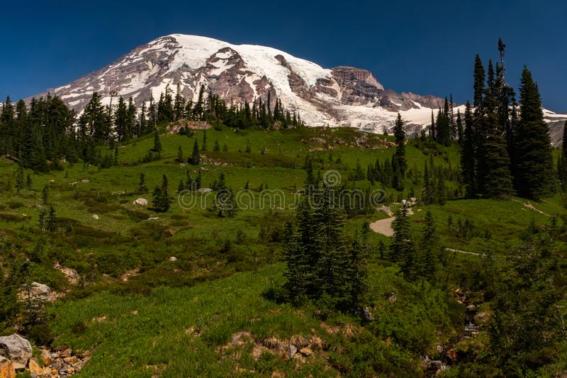 A snow capped mountain, Mount Rainier, at spring time with a lush green meadow sprinkled with wild lowers in the stock photo