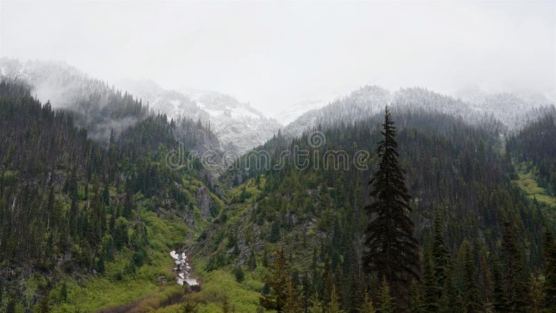 The snow-capped peaks of forest mountains and green grass on the banks of the stream stock photos