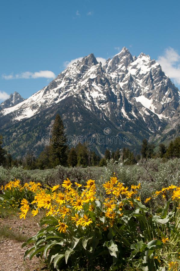Snow capped Rocky Mountains in Grand Teton National Park Wyoming royalty free stock photos