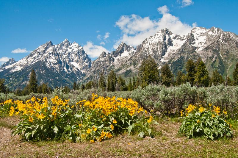 Snow capped Rocky Mountains in Grand Teton National Park Wyoming royalty free stock photo