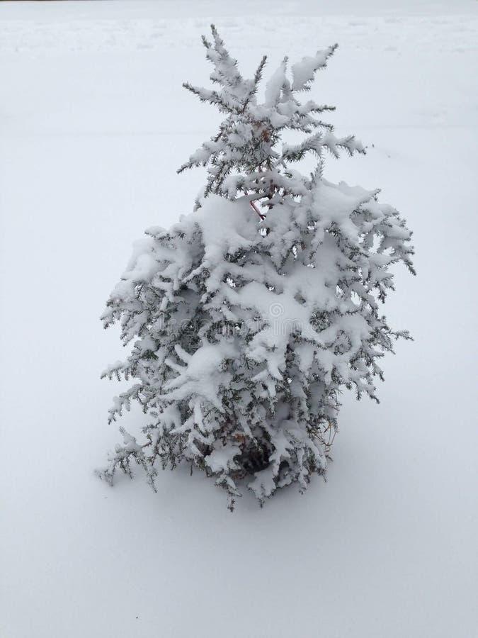 Snow christmas tree royalty free stock photo