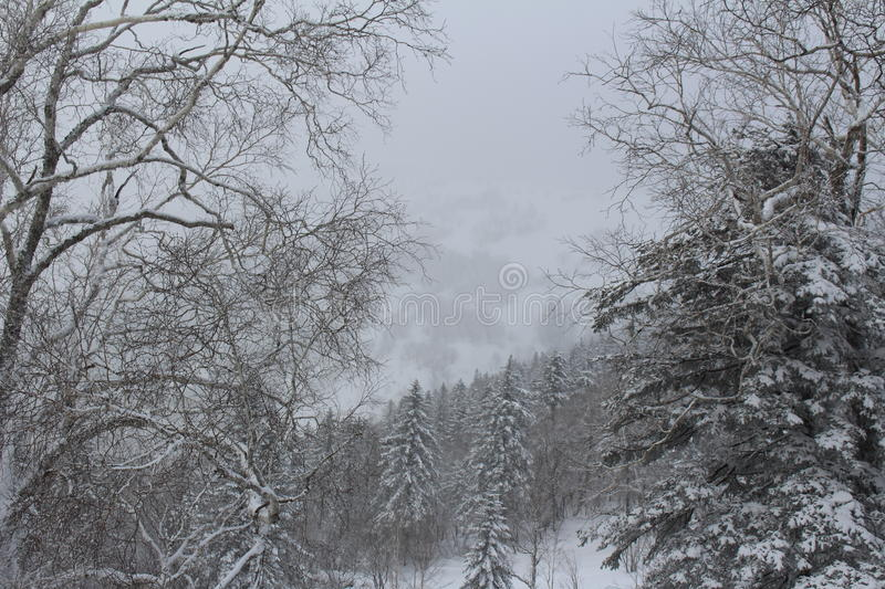 Snow country royalty free stock images