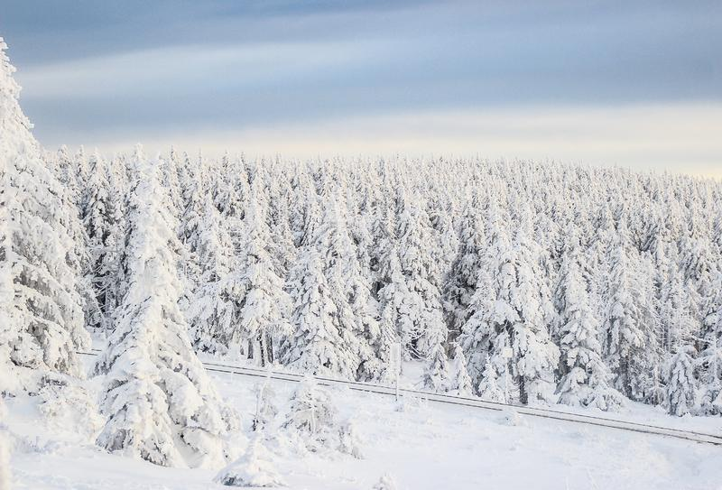 Snow coverd pine trees. In the harz mountains in germany stock image