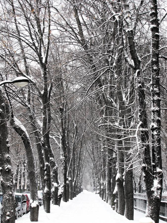 Snow-covered alley in the city royalty free stock photos