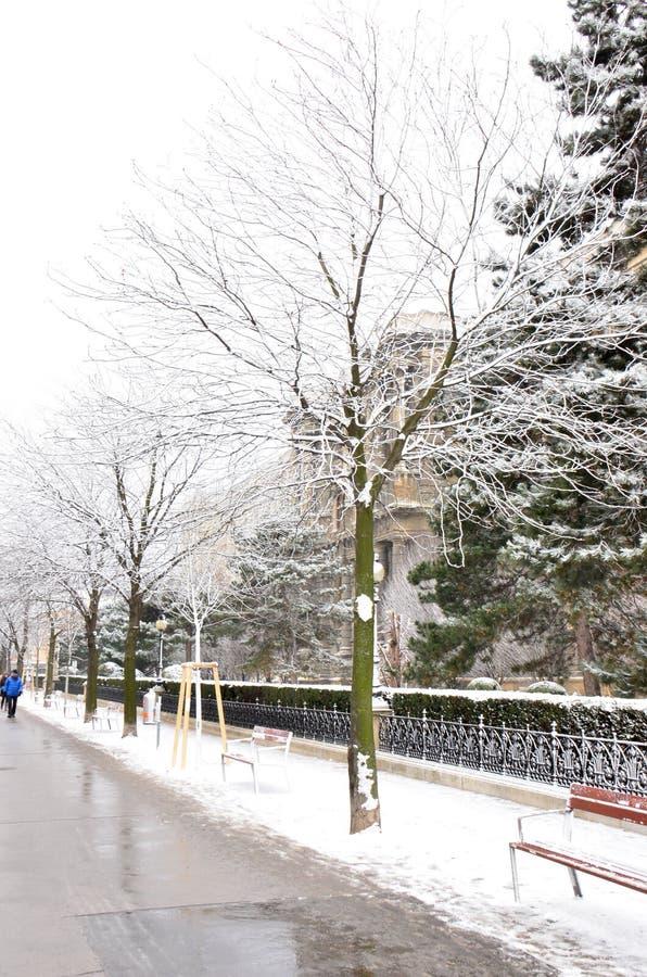 Snow-covered Bäume stockfotos
