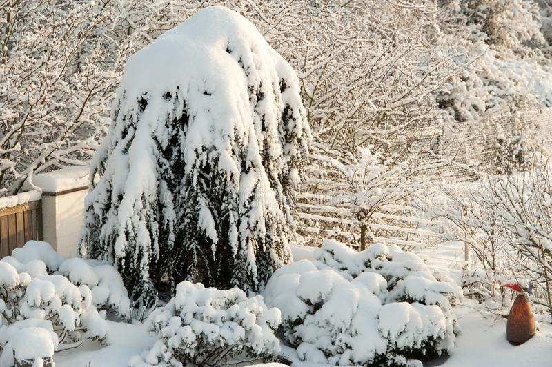 Fresh fallen snow on trees and plants in winter garden stock image