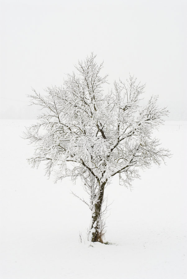 Snow-covered Baum lizenzfreie stockbilder