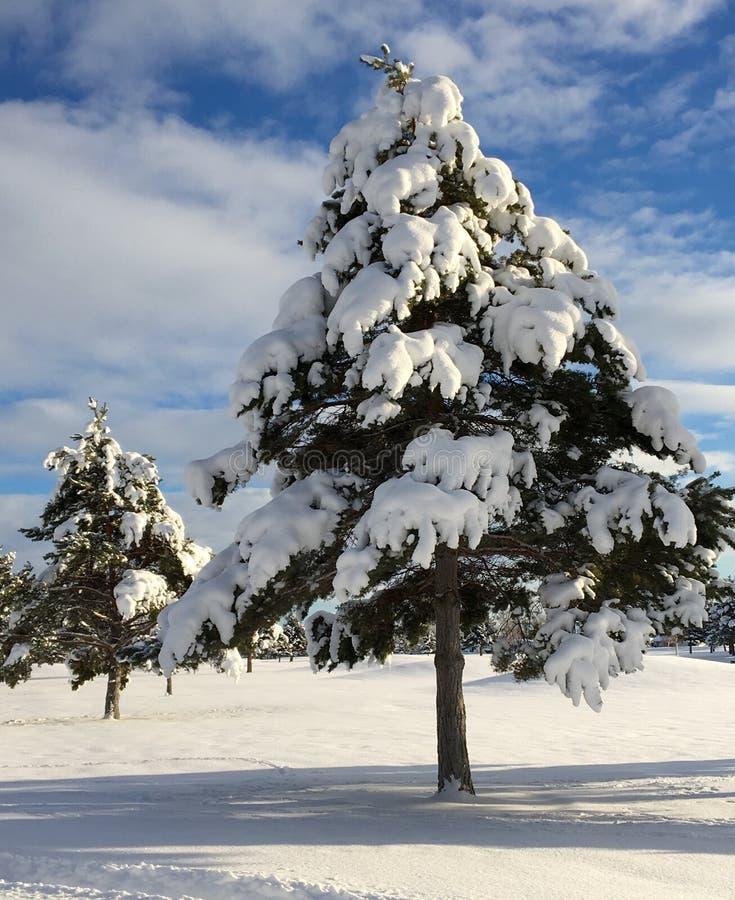 Snow-covered bomen royalty-vrije stock afbeelding