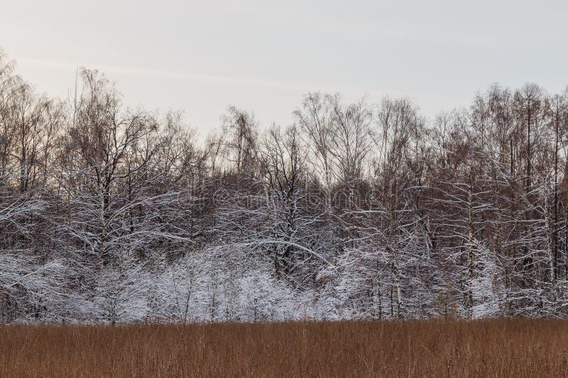 Snow-covered bomen en struiken op de achtergrond van de zonsonderganghemel stock fotografie