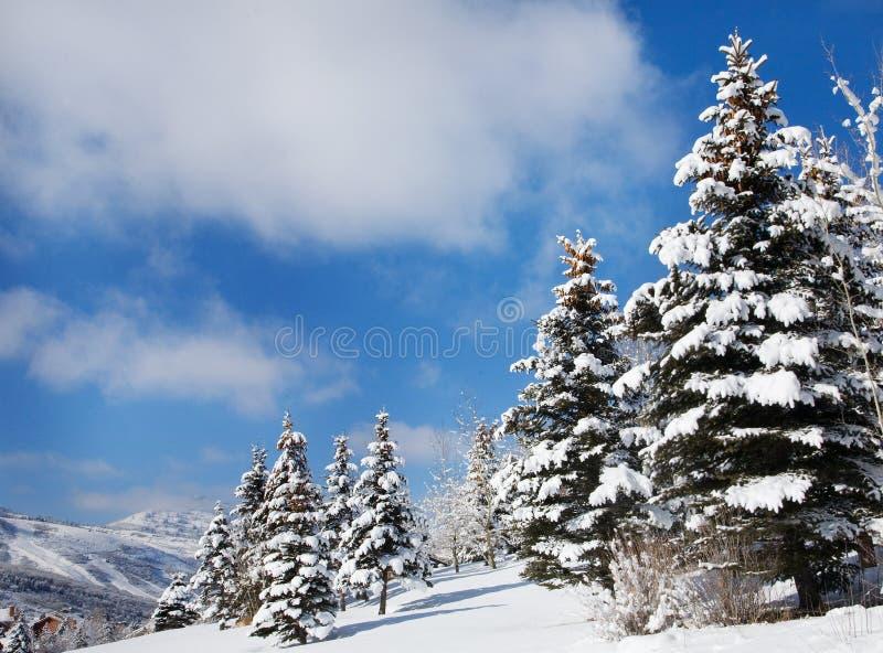 Snow-Covered Bomen op een Zonnige Dag, Utah royalty-vrije stock foto's