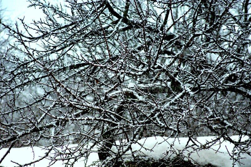 Snow-covered boom vertakt zich mooi die kant in de sneeuwrest tegenover elkaar wordt gesteld royalty-vrije stock foto