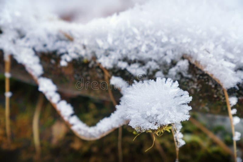 Snow-covered boomtak royalty-vrije stock fotografie