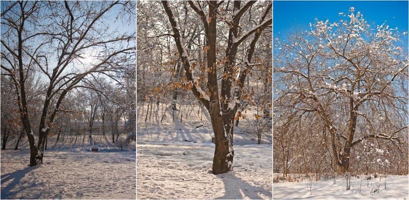 Snow-covered boomtakken Mooi de winterlandschap met sneeuw behandelde bomen De winter in bos, zon die door takken glanzen stock foto's