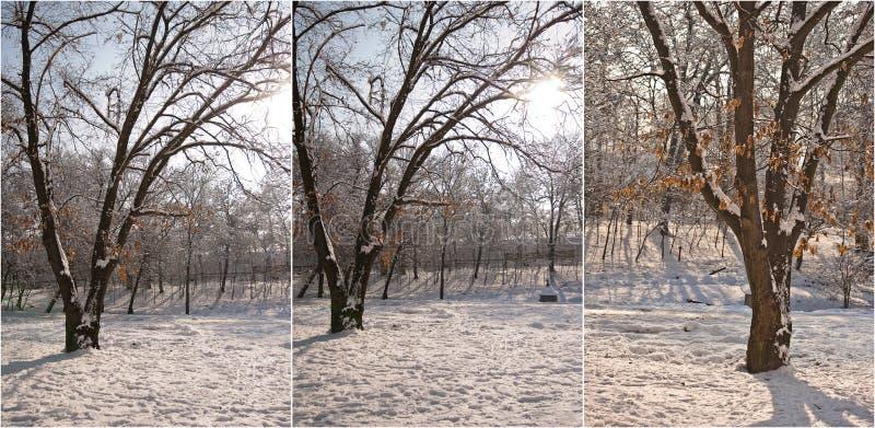 Snow-covered boomtakken Mooi de winterlandschap met sneeuw behandelde bomen De winter in bos, zon die door takken glanzen royalty-vrije stock foto's
