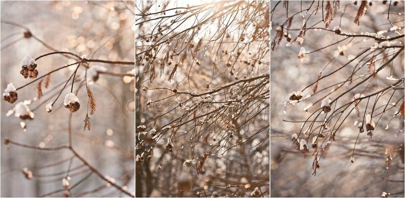 Snow-covered boomtakken Mooi de winterlandschap met sneeuw behandelde bomen De winter in bos, zon die door takken glanzen royalty-vrije stock fotografie