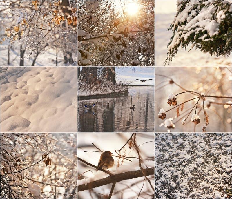Snow-covered boomtakken Robin in de sneeuw in de winter De landschappen van de winter met sneeuw Mooi de winterlandschap met snee royalty-vrije stock foto's