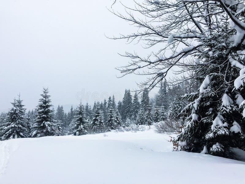 Snow-covered bos in de bergen royalty-vrije stock foto's