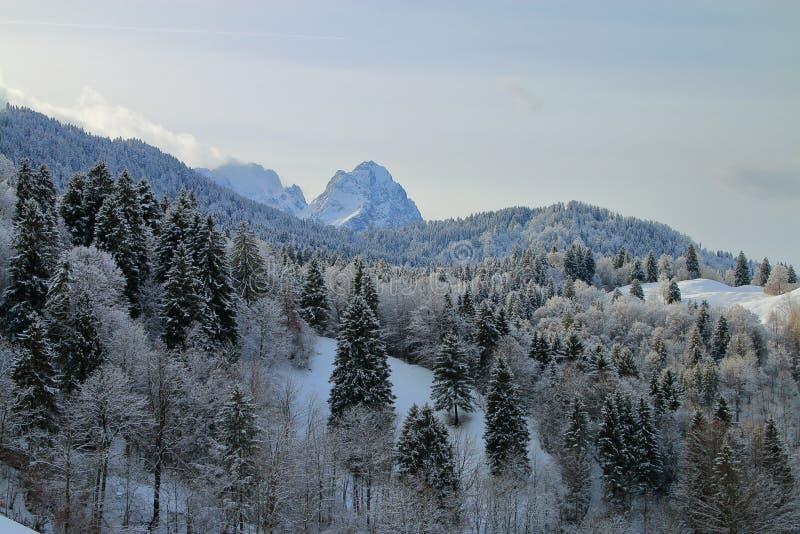 Snow-covered bos tegen de achtergrond van bergpieken royalty-vrije stock afbeelding