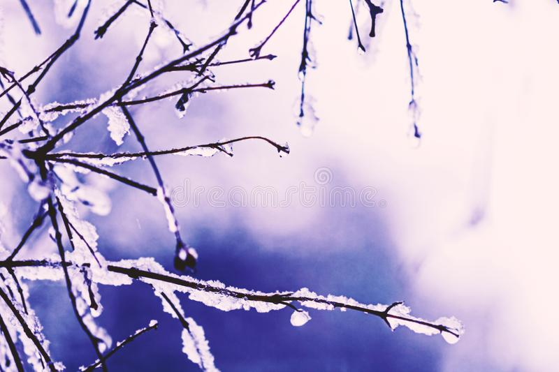 Snow-covered branches with fairytale drops royalty free stock photography