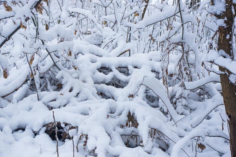 Snow-covered branches and trees in the city park. Winter landscape stock photography
