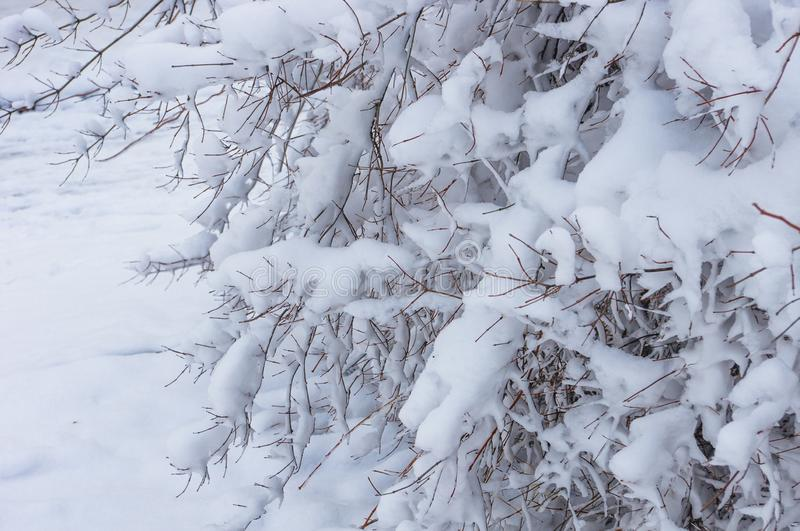 Snow-covered branches and trees in the city park. Winter landscape stock image