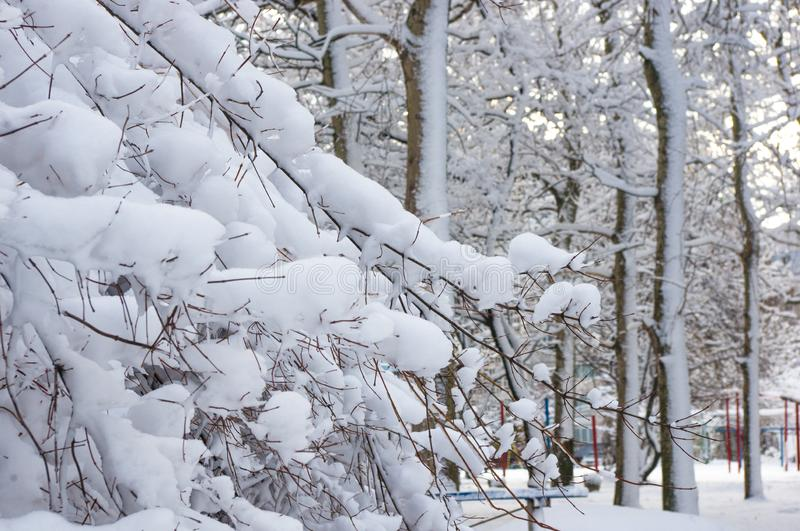 Snow-covered branches and trees in the city park. Winter landscape stock images