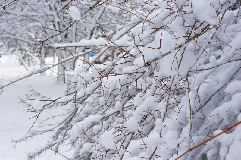 Snow-covered branches and trees in the city park. Winter landscape royalty free stock photos