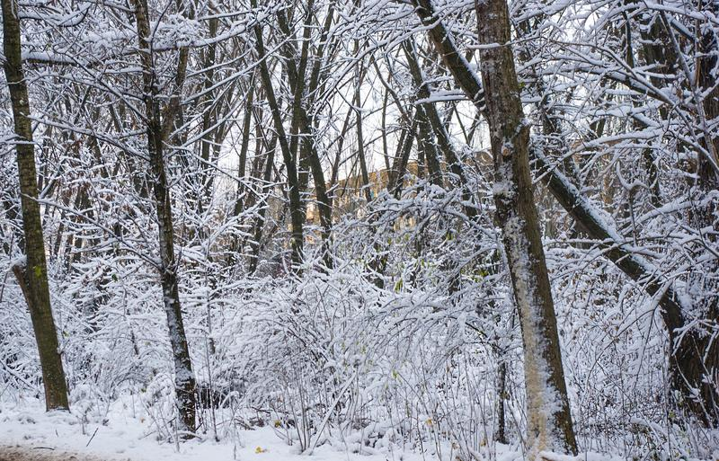 Snow-covered branches and trees in the city park. Winter landscape royalty free stock image